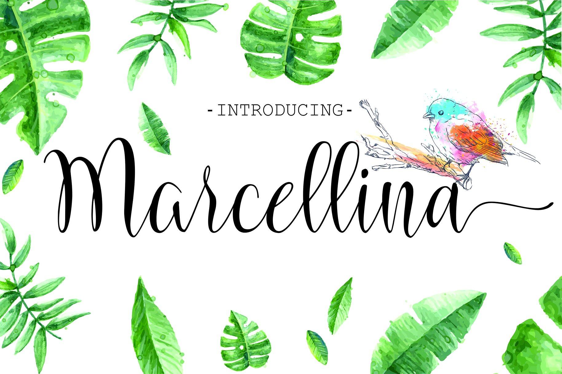 Marcellina Script