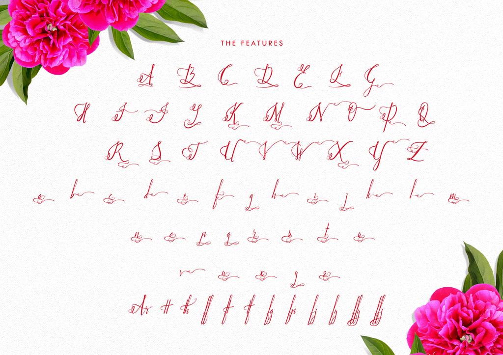 Paradise Script